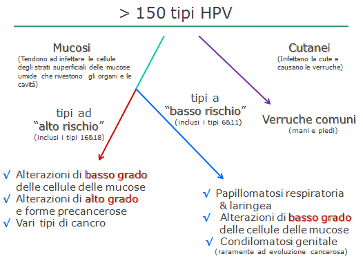HPV nuovo